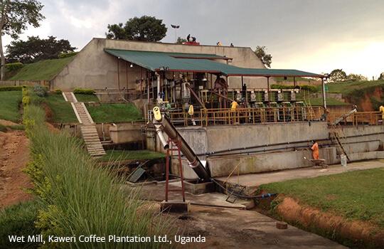 Wet Mill Kaweri Coffee Plantation